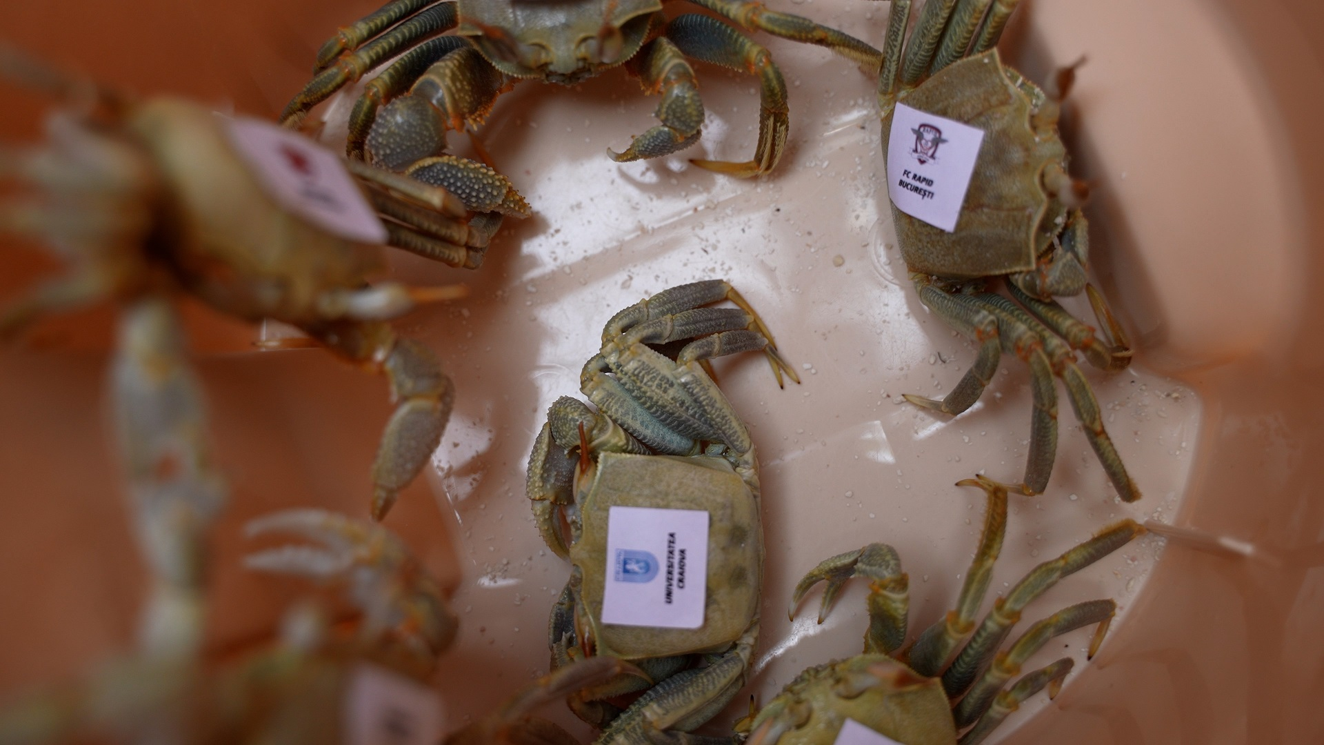 crabi ep 6