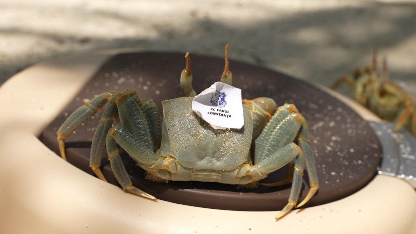 promo 6 crab 2
